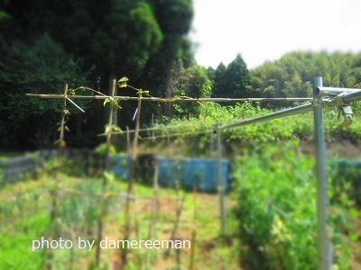 2015.5.10開墾地9