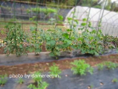 2015.5.15菜園