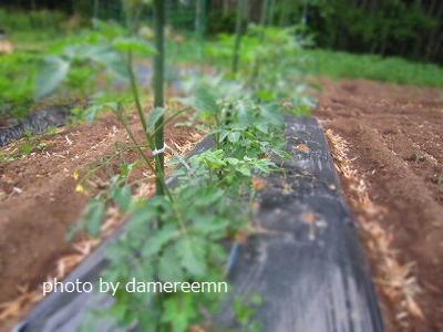 2015.5.15菜園3