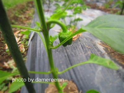 2015.5.15菜園4