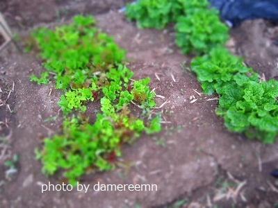 2015.5.15菜園7