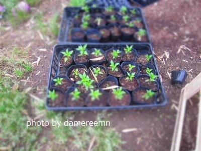 2015.5.15菜園8
