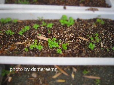 2015.5.15菜園12