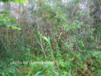 2015.5.16菜園