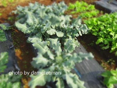 2015.5.17菜園5