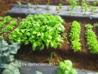 2015.5.17菜園6