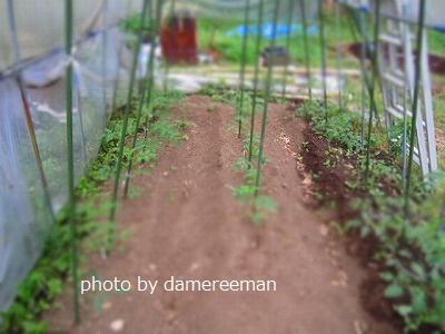 2015.5.17菜園7