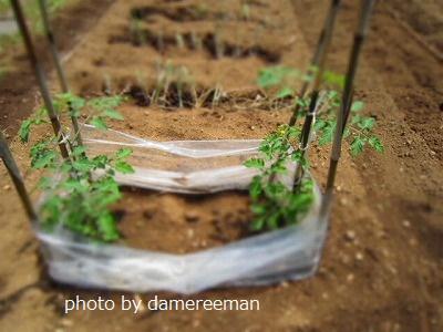 2015.5.17菜園18