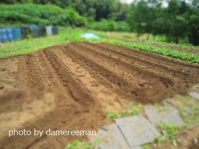 2015.5.17菜園19