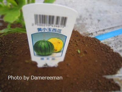 2015.5.20菜園2