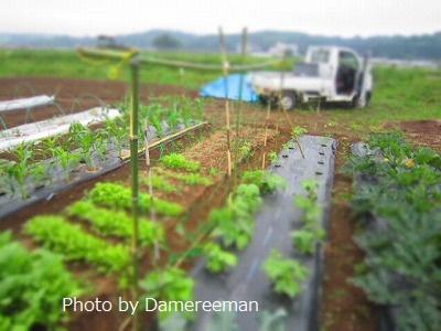 2015.5.20菜園6