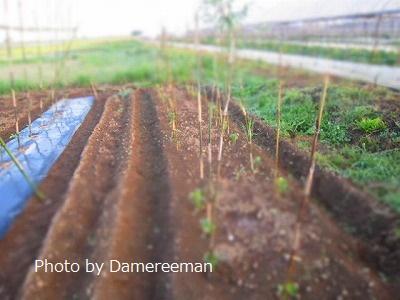 2015.5.21菜園3