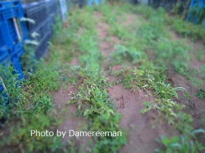 2015.5.21菜園16