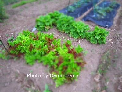2015.5.23菜園8