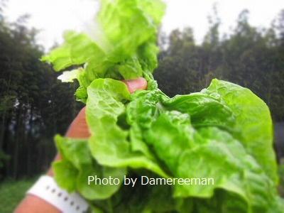 2015.5.23菜園10