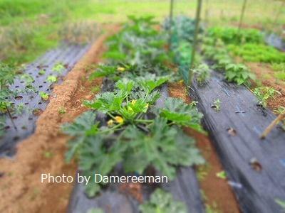 2015.5.23菜園32