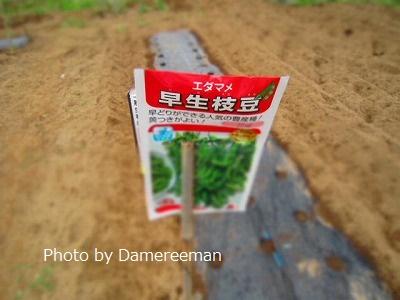 2015.5.24菜園8