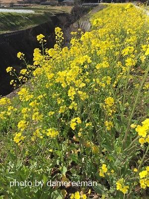 2015.3月 完熟堆肥8