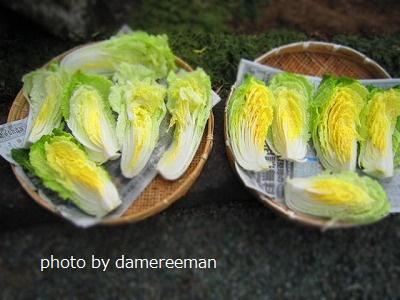 2015.1.13白菜3