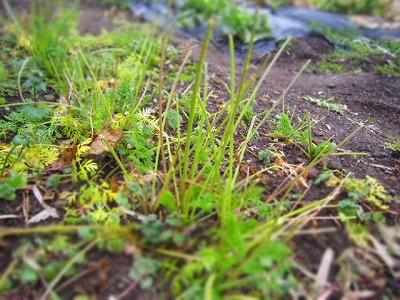 2015.1.24菜園2