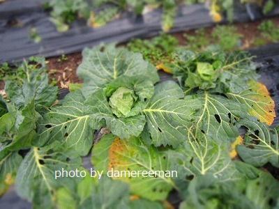 2015.1.24菜園13