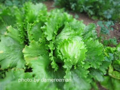 2015.1.24菜園16