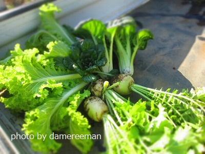 2015.2.1菜園4