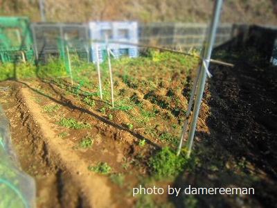 2015.2.1菜園8