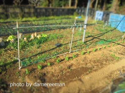 2015.2.1菜園9