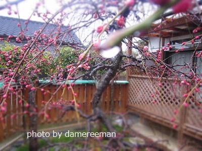 2015.2.22菜園