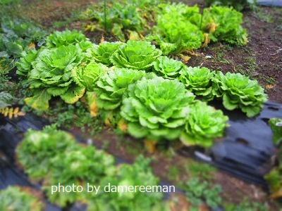 2015.2.22菜園12