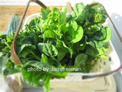 2015.3.8家庭菜園6