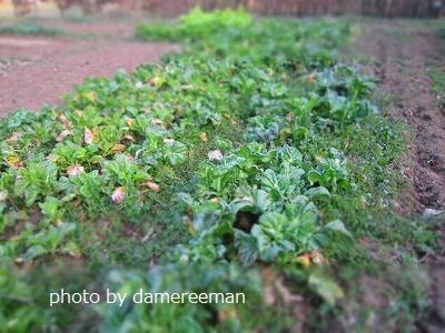 2015.3.14菜園9