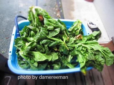 2015.3.15高菜
