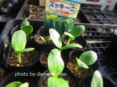 2015.3.21菜園3
