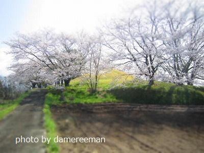 2015.3.29桜