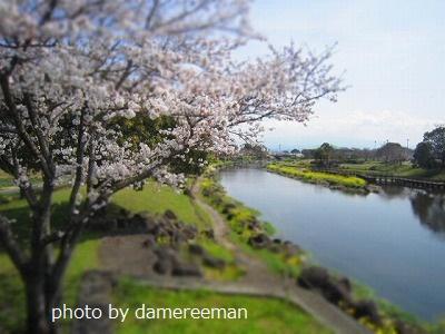 2015.3.29桜5