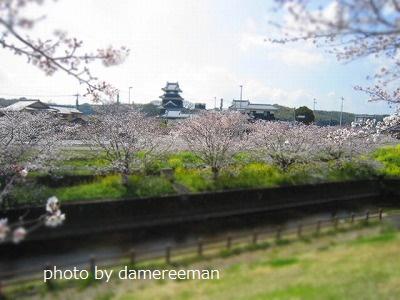 2015.3.29桜8