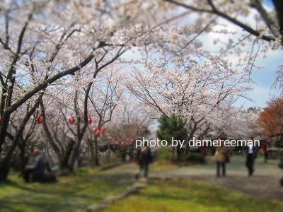 2015.3.29桜13