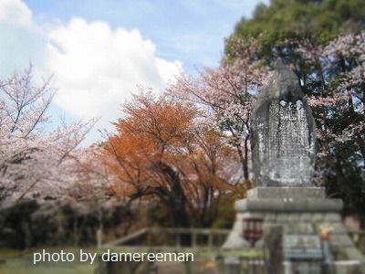 2015.3.29桜14