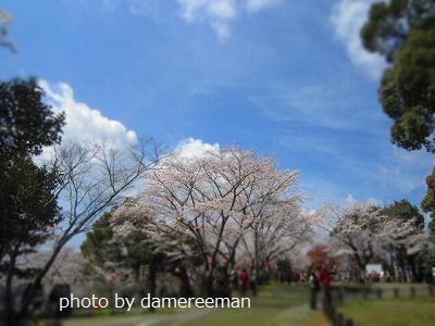 2015.3.29桜17