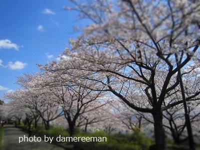 2015.3.29桜21