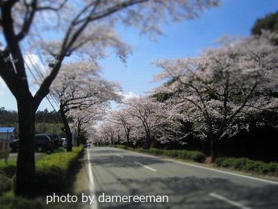 2015.3.29桜25
