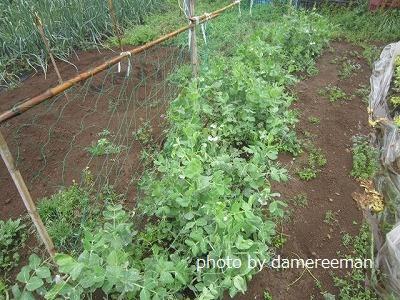 2015.4.4菜園6