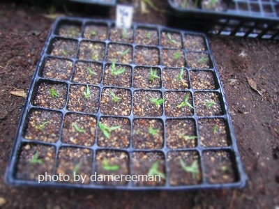 2015.4.7菜園