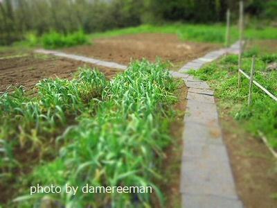 2015.4.12菜園15