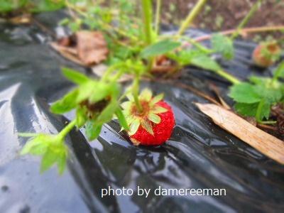 2015.4.18菜園8