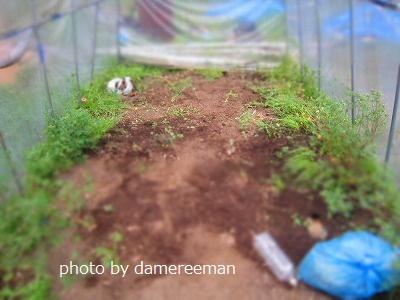 2015.4.19菜園3
