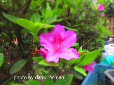2015.4.19菜園12