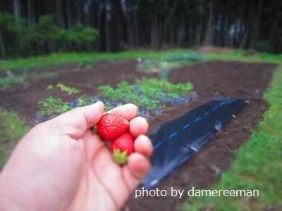 2015.4.19菜園16